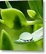 Perfect Raindrop Metal Print