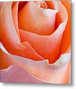 Perfection In A Peach Rose Metal Print