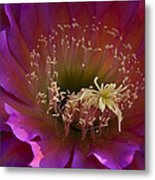 Perfectly Pink  Metal Print