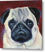 Perfectly Pug Metal Print
