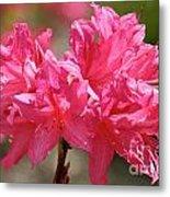 Periscope Pink Metal Print
