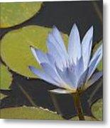 Periwinkle Lily Metal Print