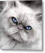 Persian Cat With Blue Eyes Metal Print