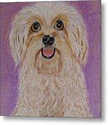 Pet Dog Metal Print by David Hawkes