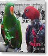 Pet Parrots In A Cafe Metal Print