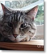 Pet Portrait - Lily The Cat Metal Print