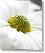 Petal Froth Metal Print