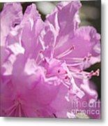 Petal Pink By Jrr Metal Print