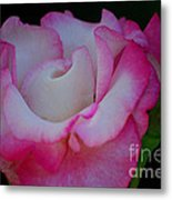 Petals Abstract Metal Print