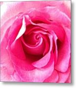 Petals Of Beauty Metal Print