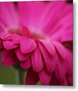 Petals Pink Metal Print