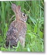 Peter Rabbit Metal Print