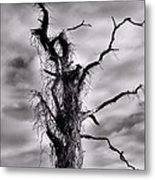 Petrified Tree Metal Print