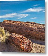 Petrified Wood Metal Print