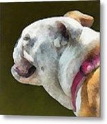 Pets - English Bulldog Profile Metal Print