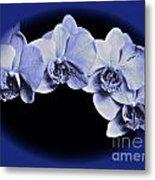 Phalaenopsis 2 Metal Print