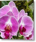 Phalaenopsis Orchid Hawaii All Profit Benefit Hospice Of The Calumet Area Metal Print