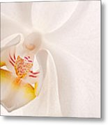 Phalaenopsis White Orchid Metal Print