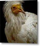 Pharaoh's Chicken Metal Print