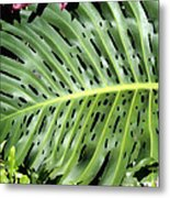 Philodendron 6 Metal Print