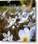 Phlox In The Wind Metal Print by Steven Valkenberg
