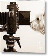 Pho Dog Grapher Metal Print