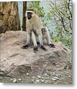 Photogenic Monkey Metal Print