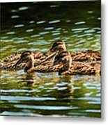 Photography Painting Of Mother And Her Ducklings Metal Print