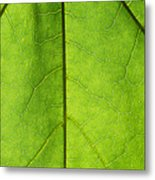 Photosynthesis - Featured 3 Metal Print