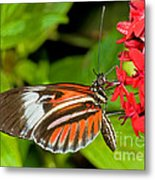 Piano Key Butterfly Metal Print