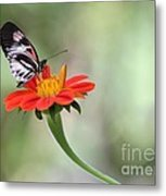 Piano Wings Butterfly Metal Print