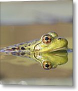 Pickerel Frog Nova Scotia Canada Metal Print