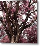 Picnic Rose  Metal Print