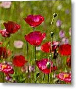 Picture Perfect Poppies Metal Print