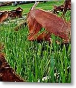 Pieces In The Lawn Metal Print
