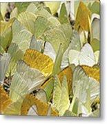 Pierid Butterfly Pieridae Puddling Metal Print