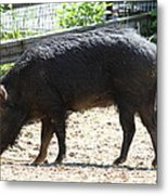 Pig - National Zoo - 01131 Metal Print by DC Photographer