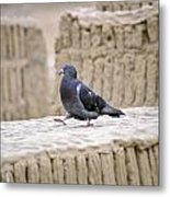Pigeon At Huaca Pucllana In Lima Peru Metal Print