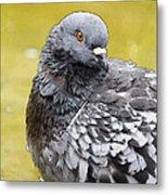Pigeon Bath Metal Print