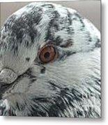 Pigeon Close-up Metal Print