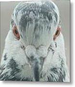 Pigeon Portrait En Face Metal Print