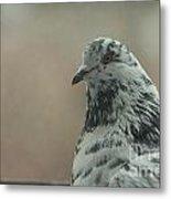 Pigeon Portrait Metal Print