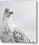 Pigeon Pride II Metal Print