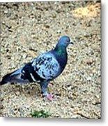 Pigeon Toed Metal Print