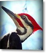 Pileated Close Up Metal Print