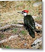 Pileated Woodpecker Forest Floor Metal Print