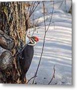 Pileated Woodpecker Winter Metal Print