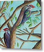 Pileated Woodpeckers Metal Print