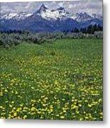 1a9210-pilot Peak And Wildflowers Metal Print