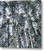 Pine Abstract Metal Print